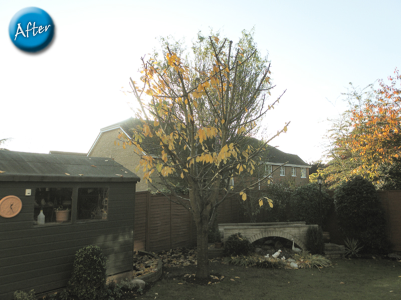 tree-pruning-afer