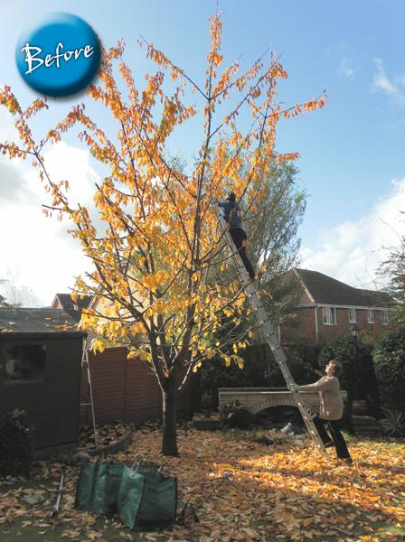 tree-pruning-before
